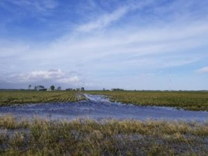 flooded soybean field