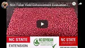 Cover photo for Non-Foliar Yield Enhancement Products in NC Soybeans