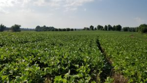 Cover photo for Video: Applying Foliar Fertilizers to Soybeans